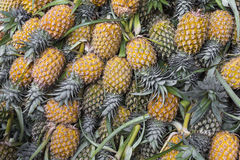 Fresh pineapple in local market  in Kandy, Sri Lanka. Background Stock Image