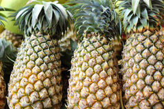 Fresh pineapple in the market Royalty Free Stock Photo