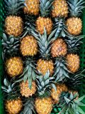 Fresh pineapple neatly arranged in the box royalty free stock image