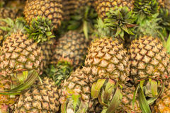 Fresh Pineapple. Pile of fresh tropical pineapple fruit Royalty Free Stock Photos