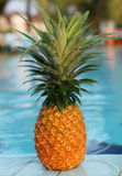 Fresh pineapple and pool Royalty Free Stock Photo