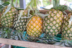 Fresh pineapple for sale Stock Photography