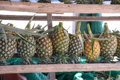 Fresh pineapple for sale Stock Photos