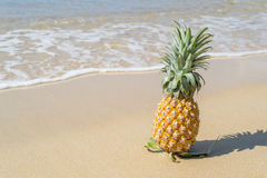 Fresh Pineapple on the sandy beac Stock Images