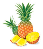 Fresh pineapple with slices vector illustration. Royalty Free Stock Image