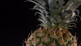 Fresh pineapple spinning on black background. Turntable stock video