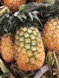 Fresh pineapple tropical fruit Stock Photos