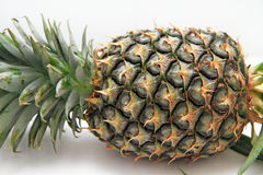 Fresh pineapple  with white isolate background Stock Images