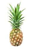 Fresh pineapple. Whole fresh ripe pineapple isolated on white background Royalty Free Stock Photos
