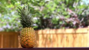 Fresh pineapple on a wooden table outside during the day. On a summer stock video