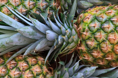 Fresh pineapples Stock Image