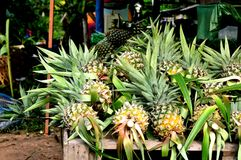 Fresh Pineapples At The Markets. Fresh Pineapples For Sale At Roadside Mini Markets Stock Images