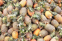 Fresh pineapples at an outdoor market Stock Images