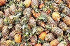 Fresh pineapples at an outdoor market Royalty Free Stock Image