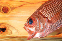 Fresh Pinecone soldierfish for cooking. From asian fishery market photo in daylight time show big eyes and pink scales Stock Photography