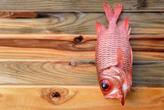 Fresh Pinecone soldierfish for cooking. From asian fishery market photo in daylight time show big eyes and pink scales Royalty Free Stock Images