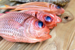 Fresh Pinecone soldierfish for cooking. From asian fishery market photo in daylight time show big eyes and pink scales Royalty Free Stock Photo