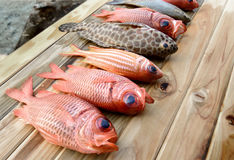 Fresh Pinecone soldierfish for cooking. From asian fishery market photo in daylight time show big eyes and pink scales Stock Photo