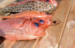 Fresh Pinecone soldierfish for cooking. From asian fishery market photo in daylight time show big eyes and pink scales Stock Images