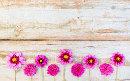 Fresh pink flowers border. Pink flower blossoms decoration on shabby wood background Royalty Free Stock Photos