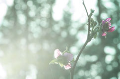 Fresh pink flowers in bright morning light Stock Image