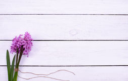 Fresh pink flowers hyacinths on white wooden table, top view Royalty Free Stock Photos