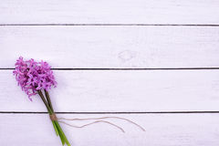 Fresh pink flowers hyacinths on white wooden table. Top view, copy space. Royalty Free Stock Images