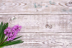 Fresh pink flowers hyacinths on white wooden table top view. Royalty Free Stock Image
