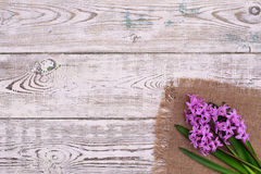 Fresh pink flowers hyacinths on white wooden table. Top view, copy space. Stock Images