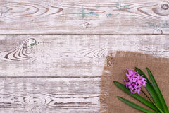 Fresh pink flowers hyacinths on white wooden table. Top view, copy space. Royalty Free Stock Photos
