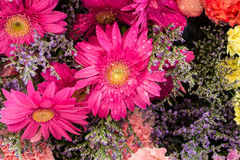 Fresh pink gerbera flower Royalty Free Stock Photo