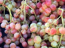 Fresh Pink Grapes Stock Photo