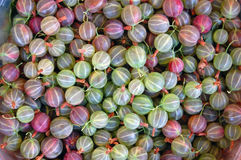 Fresh pink and green gooseberries Royalty Free Stock Photo