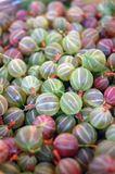 Fresh pink and green gooseberries Royalty Free Stock Photography