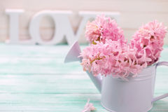 Fresh pink hyacinths flowers in  watering can and word love Stock Photos