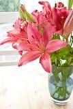 Fresh pink lilies Stock Image