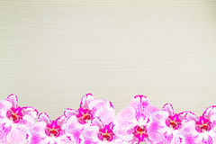 Fresh pink orchid, Phalaenopsis, bottom of the frame  on wooden background Stock Photo