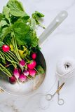 Fresh radish bunch in silver colander on marble royalty free stock images