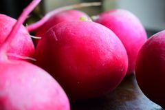 Fresh pink radish on a vintage dark background scattered from the garden Stock Photo