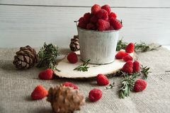 Fresh pink raspberry in a small bucket. Beautiful fresh pink raspberry in a small bucket with cones and rosemary Stock Images