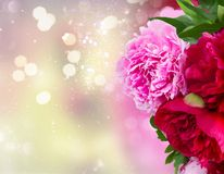 Pink and red  peonies. Fresh pink and red peony flowers over fancy background Stock Photo