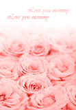Fresh pink roses border Royalty Free Stock Photography