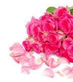 Fresh pink  roses bouquet with petals close up Royalty Free Stock Photo
