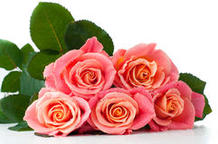 Fresh pink roses Stock Photo