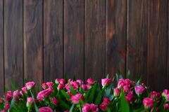 Fresh pink roses on a wooden brown background Stock Photos