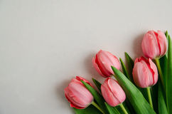 Fresh pink tulip bouquet in the lower right corner on white background with copy space isolated Royalty Free Stock Photography