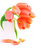 Fresh pink tulip flowers Royalty Free Stock Images