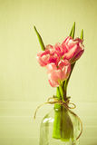 Fresh pink tulip flowers bouquet in a glass jar Royalty Free Stock Photos