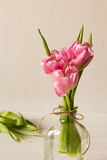 Fresh pink tulip flowers bouquet in a glass jar Royalty Free Stock Photo
