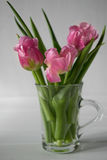 Fresh pink tulip flowers bouquet in a glass jar Stock Image